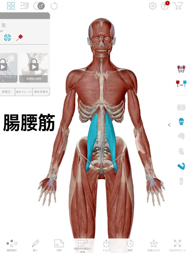 関節トレーニング(関トレ)多裂筋
